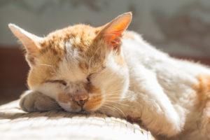 Állathamvasztás: legyen a búcsú állathoz is méltó!
