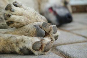 Ne halogassa: elhullott állatok szállítása!