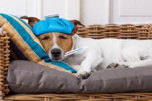 Sérült állatot talált vagy állatorvosi vizitre vinné kedvencét? Állatmentőnk a rendelkezésére áll!