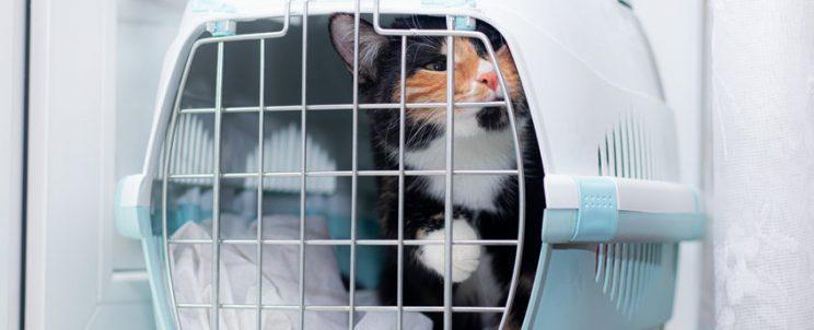 macskaszállítás, kutyaszállítás